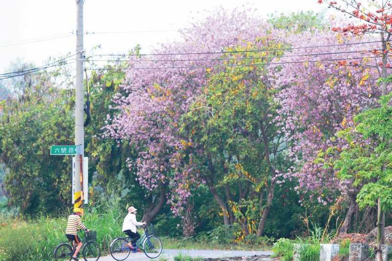 木棉、羊蹄甲、苦楝花,全台獨有的三合一美景。(圖/健行文化提供)