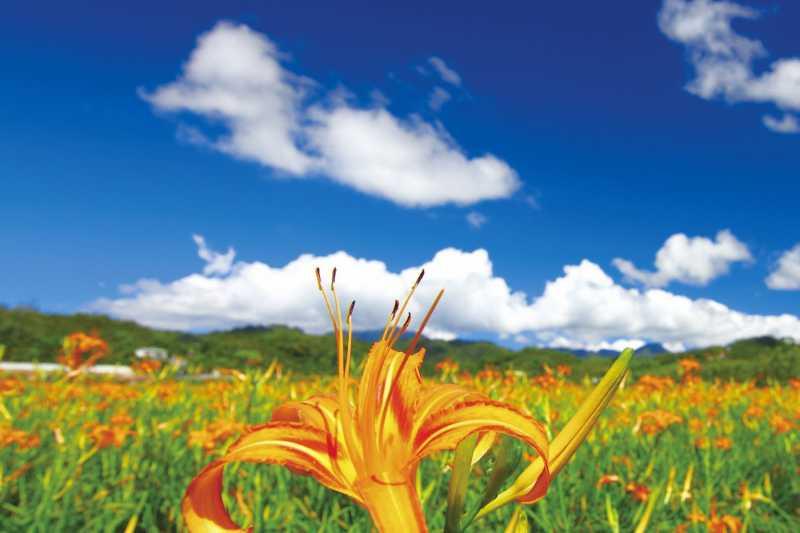 色彩繽紛交疊的金針花與絲瓜花是日月潭限定的喔!(圖/健行文化提供)