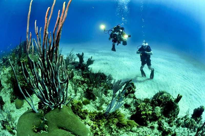 時間允許的話,鼓勵各位加入愛珊瑚的一份子,這是一個非常有趣也有意義的活動…(圖/skeeze@pixabay)