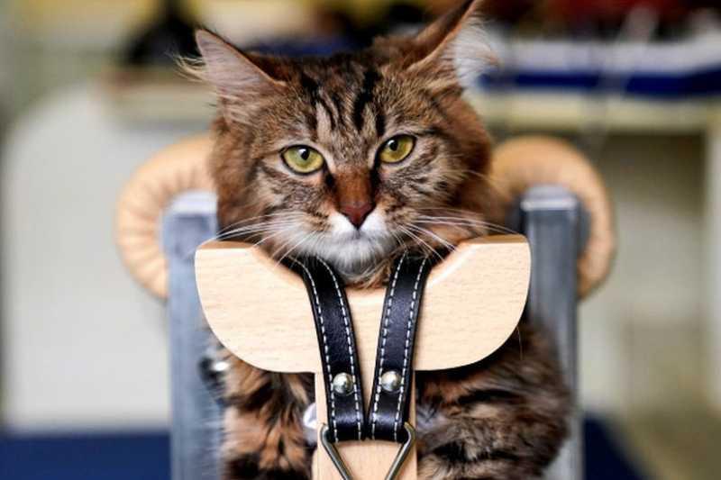 實際上,幾十年前給寵物做針灸就已經出現了,但是沒有被普遍使用。(BBC中文網)