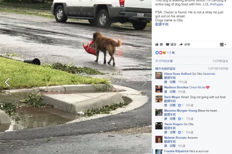 德州颶風造成淹水,路上竟見狗狗帶著狗糧逃亡。(圖/Tiele Dockens臉書)