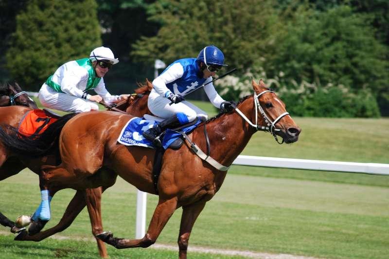 賽馬是一項非常特別的經濟產業,也是重要社交活動,每匹馬都十分嬌貴,伺侯大不易。(圖/pxhere)