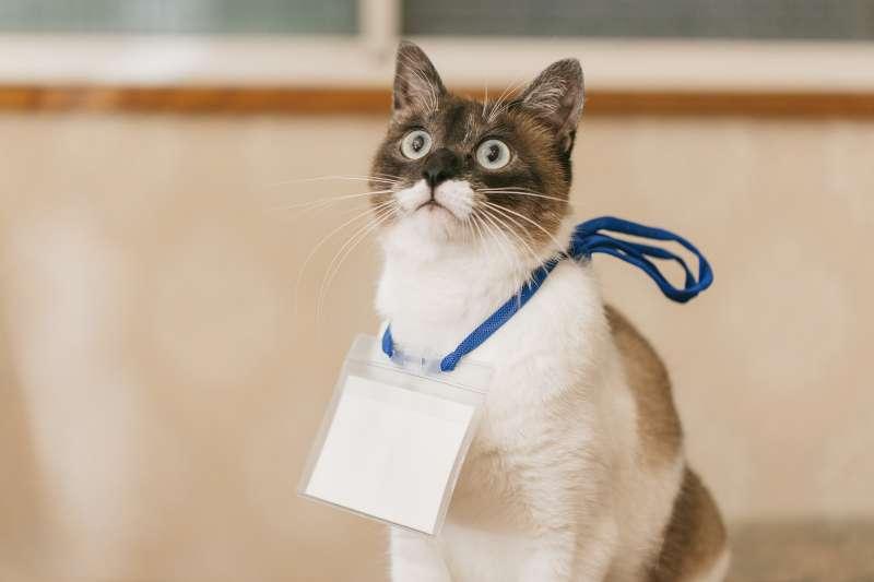 該不該帶寵物上班?一個問題激起了正反方激烈論戰。(圖/Pakutaso)