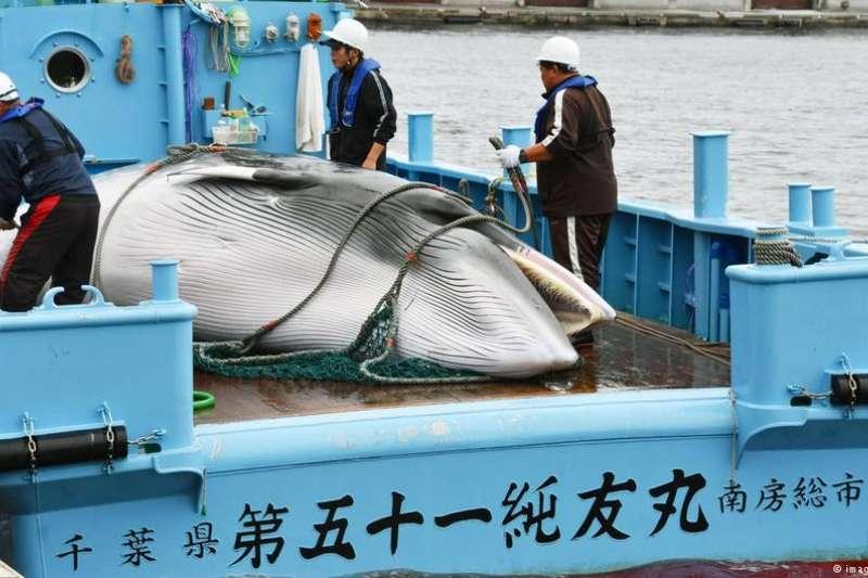 日本捕鯨船隊從此「無敵」?(德國之音)