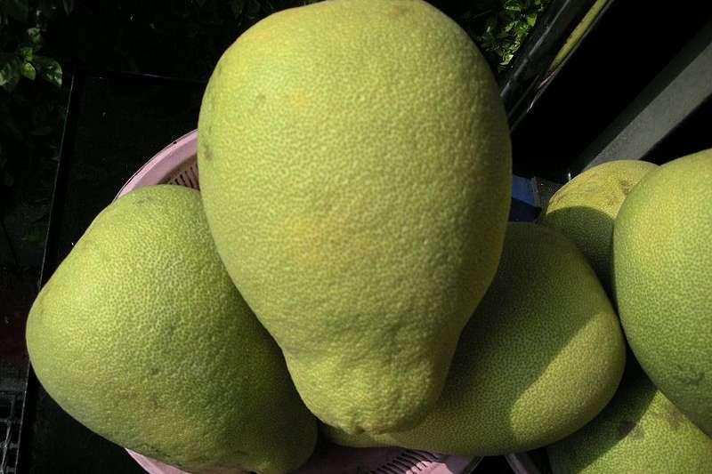文旦柚子又在市場上出現了,要怎麼挑才會挑到水分多的好吃柚子呢?農會專家有以下建議…(圖/Tianmu peter @wikimedia commons)