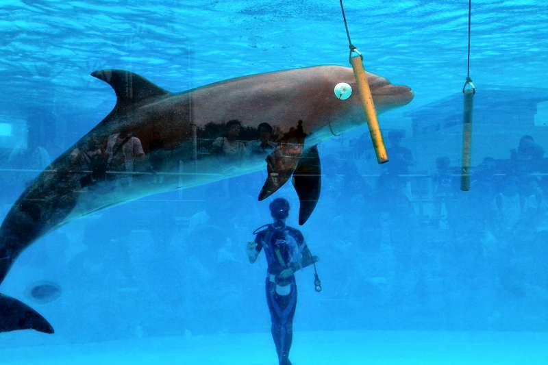 將大大的海豚關在水族箱內欣賞,人類有多麼自私啊!(圖/顏孝真提供)