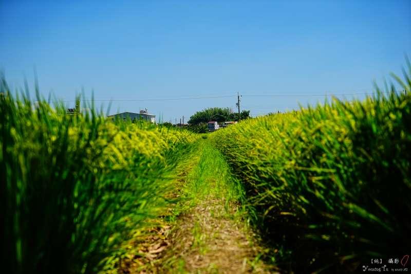 辭掉大都市的工作回鄉下種田,真的會活不下去嗎?(示意圖/Youxing Tu@Flickr)