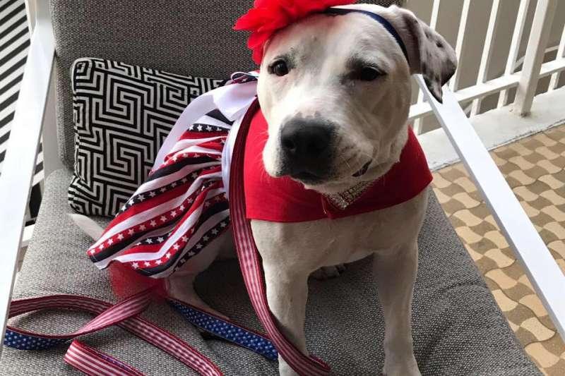 流浪狗艾碧蓋爾(Abigail)曾因為傷勢嚴重,差點被安樂死,近一年來在動保人士及新家庭的悉心照顧下,不但已經康復,還當選美國人道協會的2017年年度英雄小狗(取自Bonnets For Abigail臉書)