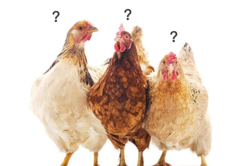 有些人習慣買雞精給考生、老人家補身子,一天喝一瓶,但究竟雞精是喝心安,還是真能有效補充能量?(圖/食力foodNEXT提供)