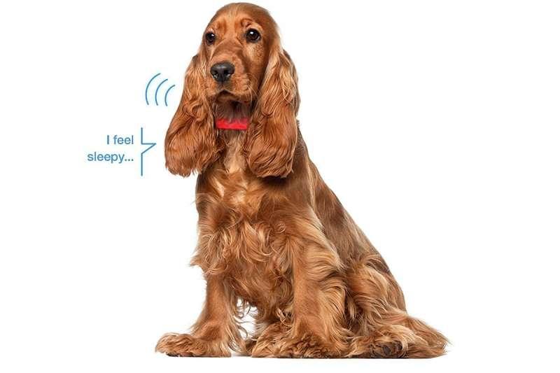 給毛小孩帶上這個項圈,包你數個願望一次滿足!更能貼心照顧寵物的需要。(圖/KYON官方提供)