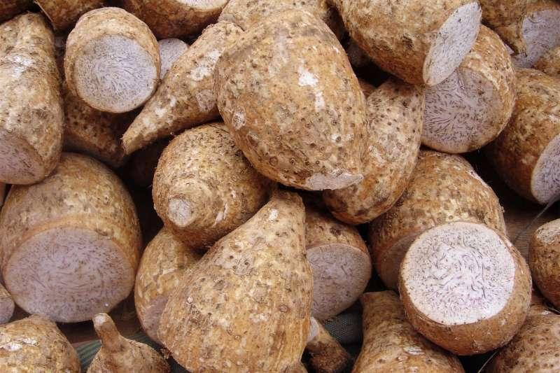 小金門將舉行芋頭季,豐收的美味芋頭和一系列豐富的活動,非常值得安排小旅遊一訪。(圖 /David.Monniaux @wikimedia commons)