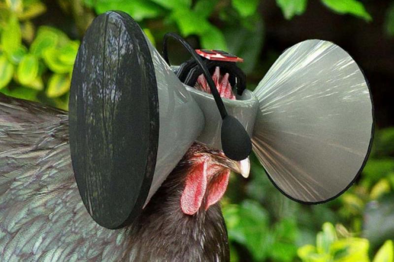 透過虛擬實境,長期被眷養在狹小的雞舍中的雞,獲得虛擬的廣大空間,因此有了不同的人生。(圖/截自secondlivestock官網)