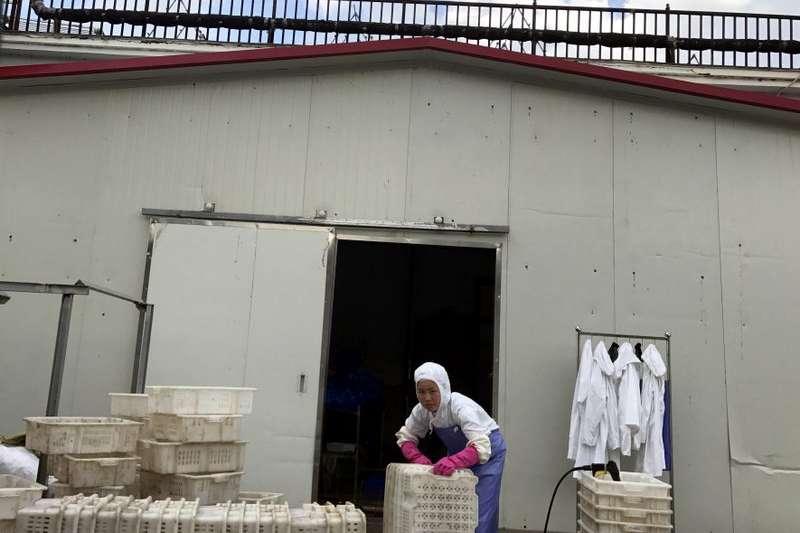 在水產加工廠工作的北韓勞工。(美聯社)
