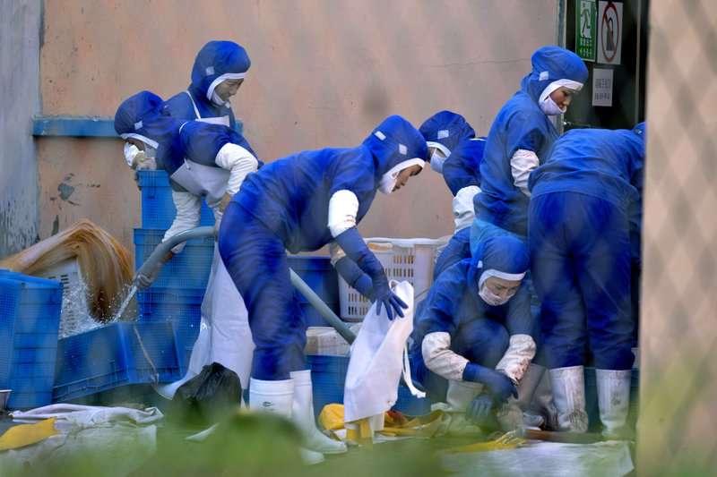 位於中國琿春的海鮮加工廠。(美聯社)