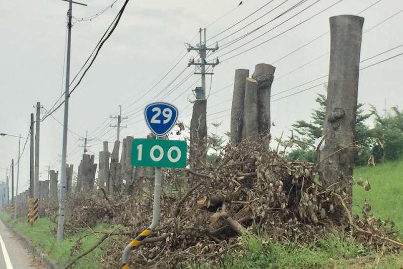 為防止樹木在颱風來襲時絞斷電線,台29線高屏溪沿岸的黑板樹近來被強砍成「平頭」,引發中央公園護樹護地聯盟批評。(資料照,取自中央公園護樹護地聯盟臉書)