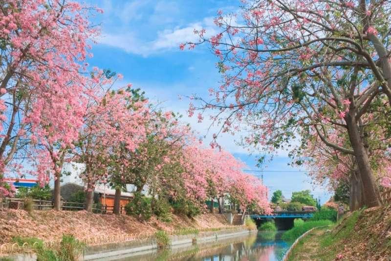 藍天搭配粉紅色花海,這麼「仙」的美景就在台灣!(圖經授權取自haoqqlovetravel@INSTAGRAM,未經同意,請勿使用)