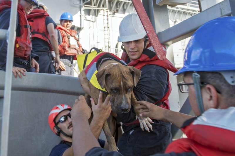 愛沛兒與芙伊爾巴的狗狗也一併獲救。(美聯社)