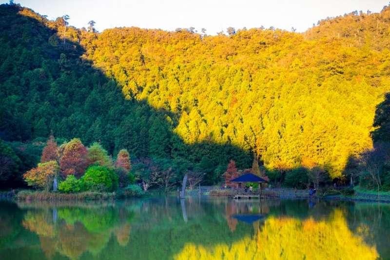 走入森林,讓滿滿的芬多精為你充滿電。(圖/明池山莊官網)