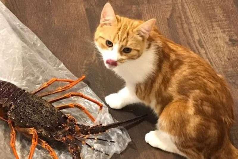 紐西蘭總理阿德恩收養派德斯不久,這隻小貓就爆紅網路。(BBC中文網)