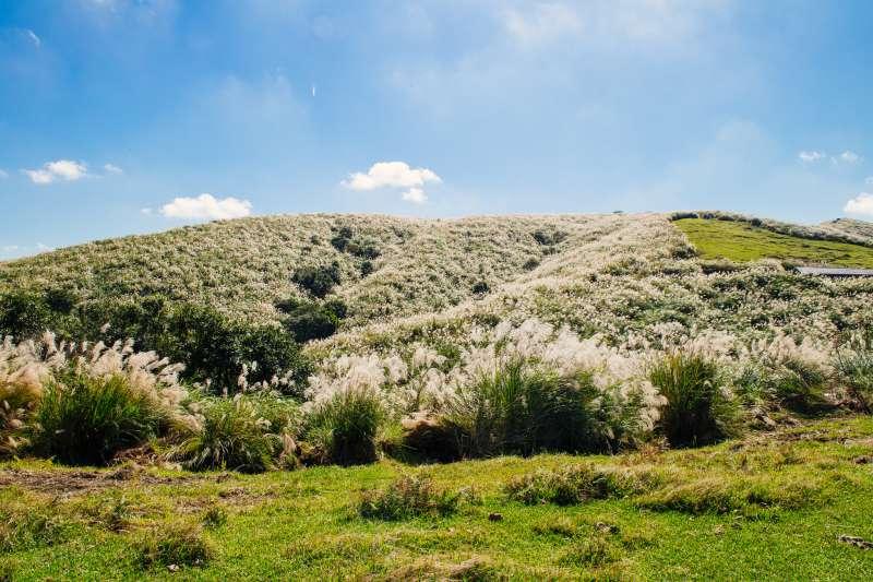 秋天適合賞芒草,滿山的芒草隨風搖曳,快用鏡頭將它們捕捉。(圖/Paul Chan@flickr)