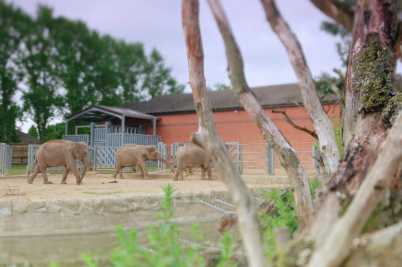 動物園有能力教育人們,如何負責任地和野生動物互動,但動物園是否願意重新評估他們最為基本,身為動物及保育機構的角色?(CNEX 提供)