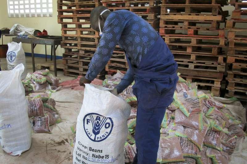 聯合國農糧組織員工將超級豆子分裝成袋,準備發放給烏干達北方的難民營。(美聯社)