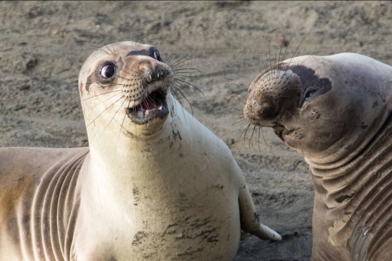 """你看過表情這麼生動的海豹嗎?搞笑動物攝影獎的作品,一張比一張精彩!(圖/ """"WTF"""" by George Cathcart. © George Cathcart/Comedy Wildlife Photo Awards)"""