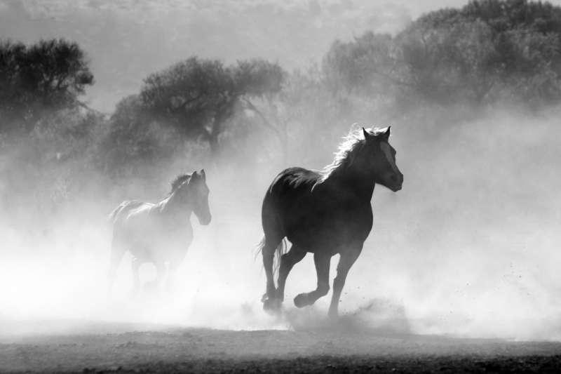 作者指出,馬不算稀有物種,可是中文裡「馬」字部首之下滅跡的字卻不知凡幾。(取自網路)