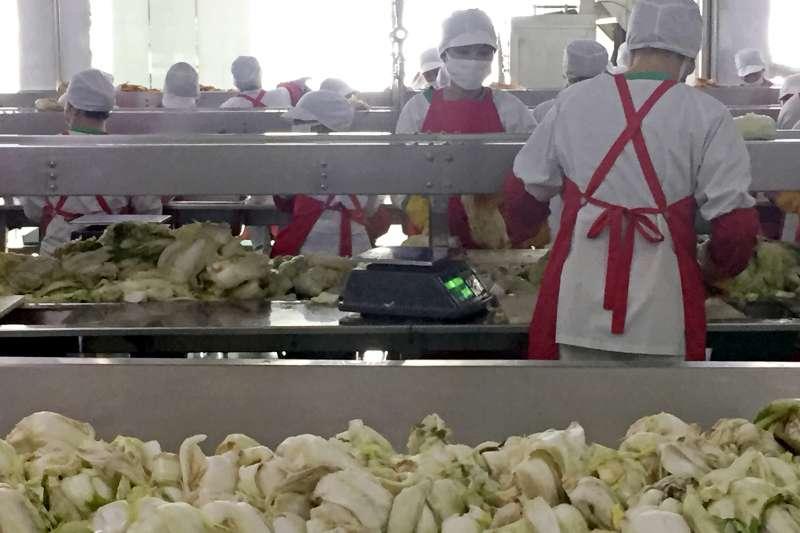 「柳京泡菜廠」中採用科學化、自動化生產流程。(美聯社)