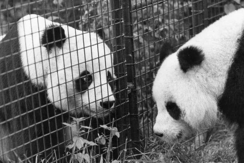 英國國家檔案揭露,前首相柴契爾夫人曾拒絕與貓熊搭同班飛機(BBC中文網)