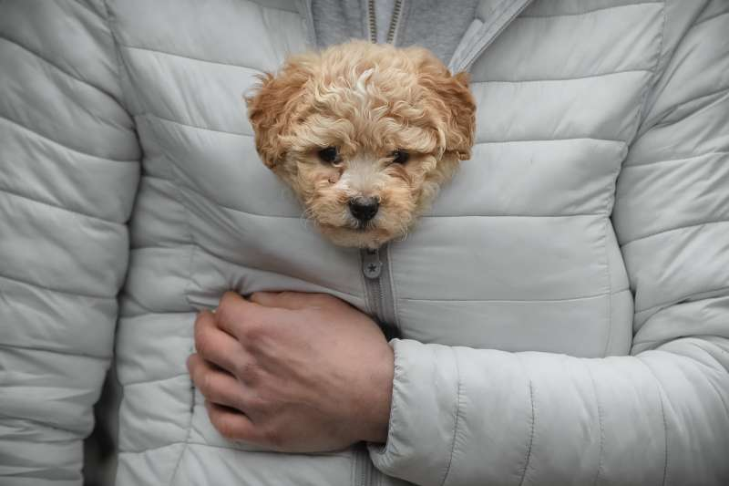 今年是狗年,狗狗是人類最好的朋友(AP)