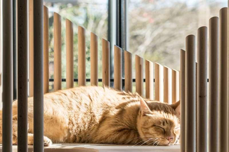 日本設計師小宮山洋打造的貓跳台「Neko」,用材高級、設計簡潔,擺在客廳除了喵星人歡喜之外,也堪稱一大風景。(圖/取自Dezeen,瘋設計提供)