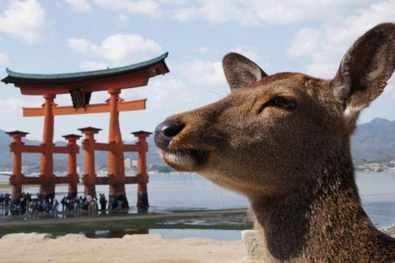 據說情侶去宮島的嚴島神社會分手?關於廣島的大小事,這篇說給你知道!(圖/matcha提供)