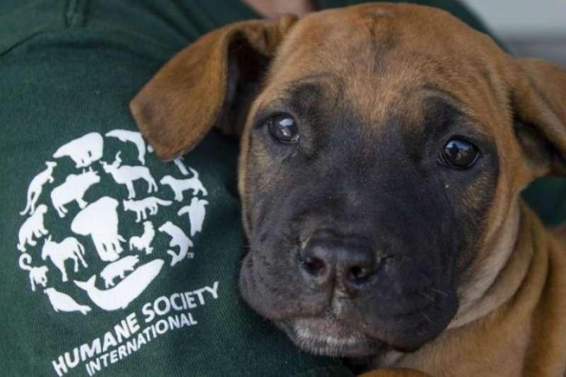 南韓一間食用狗肉養殖場,近日與國際人道協會(HSI)合作,停止販賣狗隻。(翻攝HSI臉書)