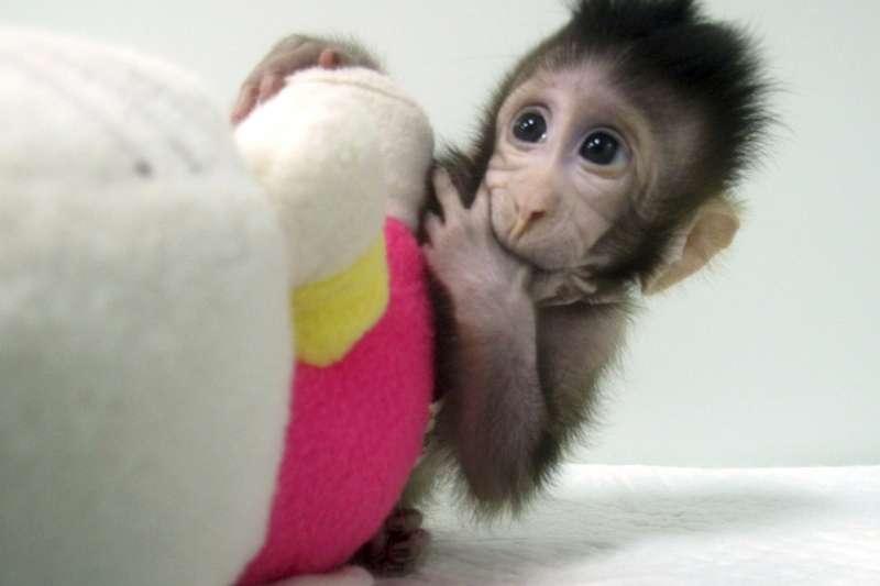 2018年1月25日,中國科學院神經科學研究所日宣布,世界上批體細胞複製猴「中中」與「華華」已在2017年底誕生,這是「中中」(AP)