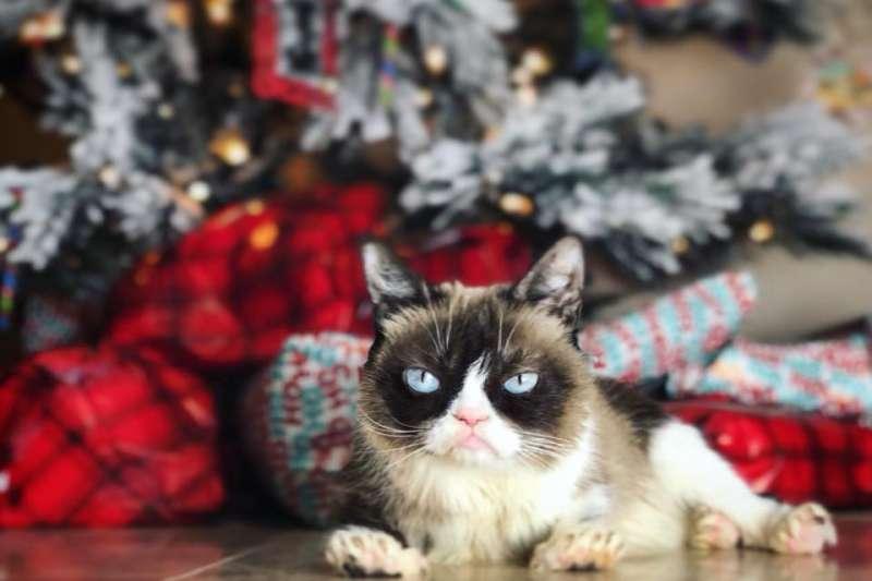 grumpy cat 2