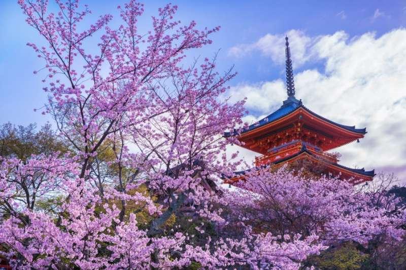對日本人來說,賞櫻是一年中最重要的事之一。若你過年也想去日本賞櫻,可能會白跑一趟喔!(圖/KKday提供)