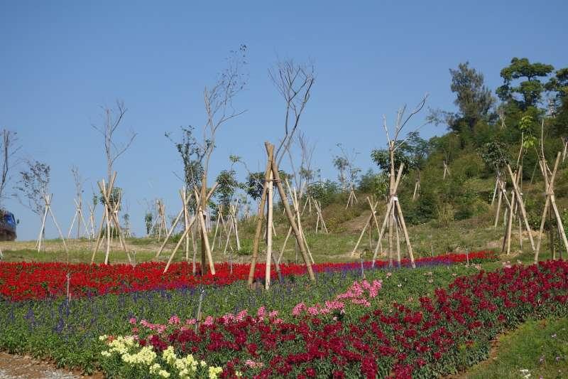 高雄市政府在農曆年前推動2018年春節花海計畫,其中在雙湖森林公園逾20公頃的裸露坡地撒播波斯菊花籽,現正花顏燦爛。(圖/高雄市政府提供)