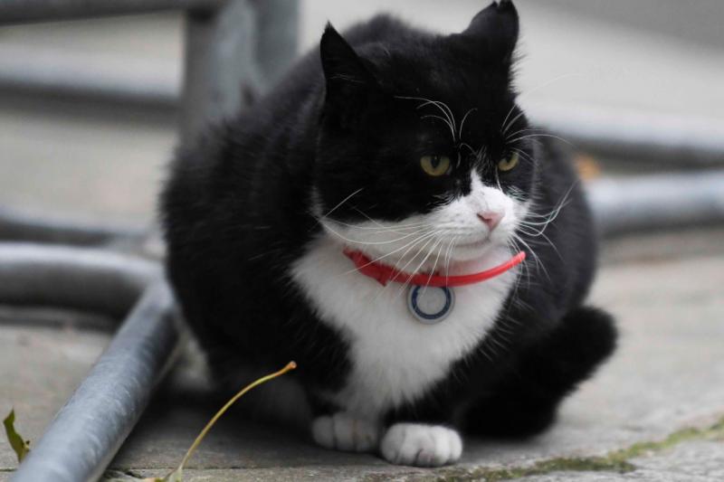 英國外交部禁止員工餵食「捕鼠官」帕默斯頓(取自@PalmerstonFOCat/Twitter)