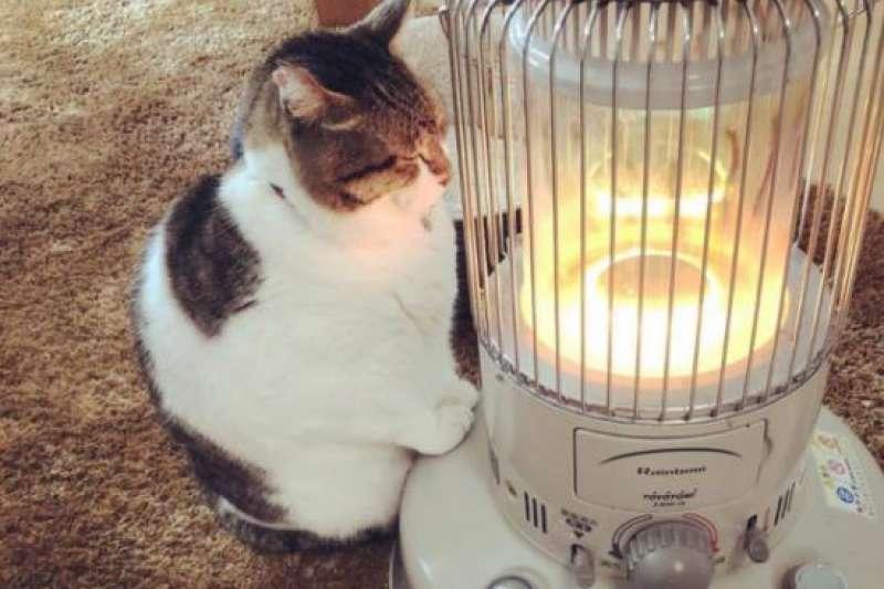 作者提到,即便兩台小暖爐完全相同,它們轉移到周遭環境的熵,仍是不同的。(示意圖,照片經飼主授權使用,IG:tanryug)