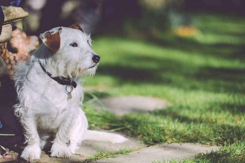 如果老闆請你幫忙照顧他的狗,你會拒絕他還是照著做呢?(圖/PEXELS)