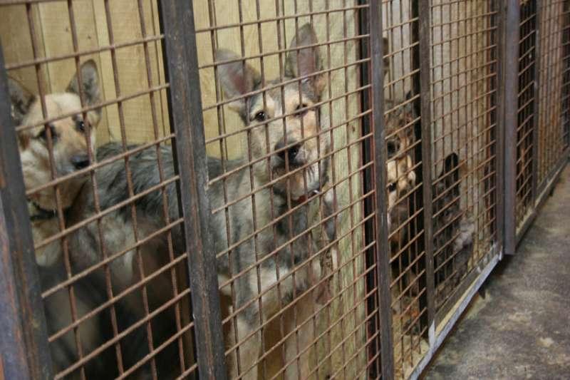 收容所空間不足,流浪犬生活空間逼仄。(圖截自俄羅斯動保組織LAPA網站)