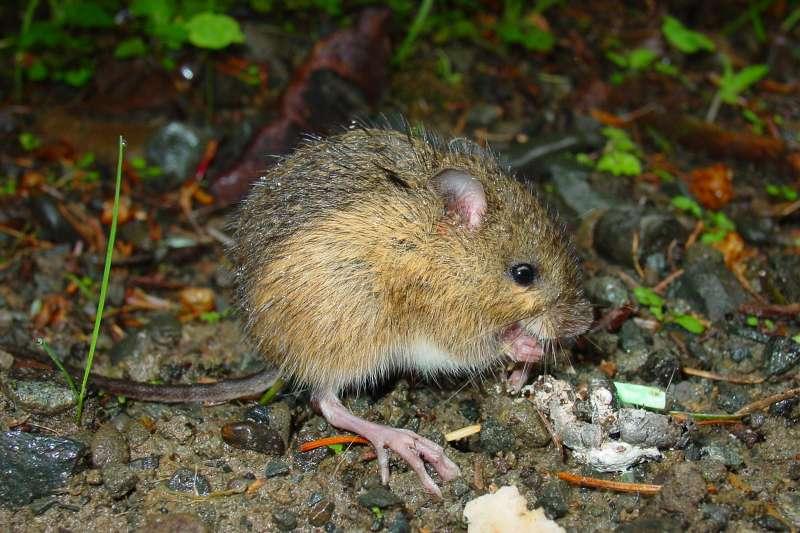 無論是否得到人類的重視,跳鼠或任何物種都有其價值。(圖/Olympic National Park@flickr)
