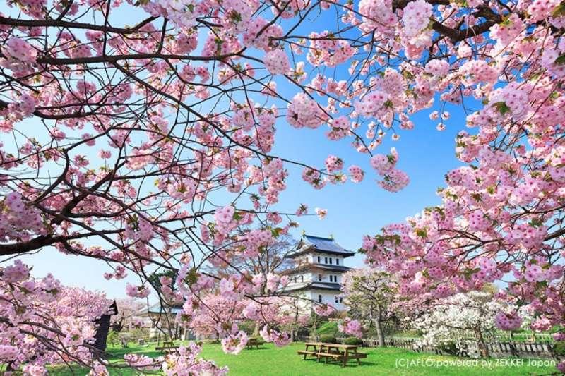 櫻花盛放的春季美不勝收,而日本的地理條件讓各地的櫻花輪流盛開,壓軸登場的北海道櫻花更是不容錯過!(圖/ZEKKEI Japan提供)