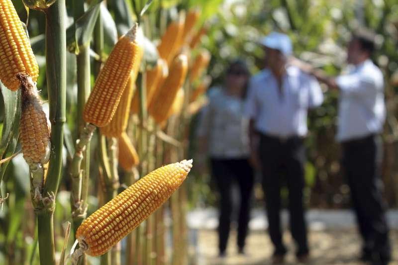 2018-03-07-巴西農業。玉米。農田。(美聯社)