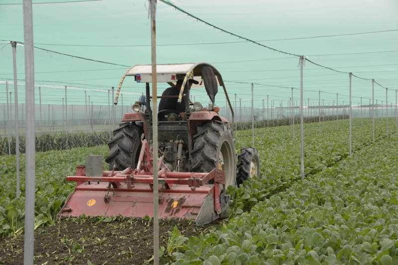 台北農產運銷公司休市三日後於3月8日開市,到貨交易量2,376公噸,整體蔬菜交易「均價」每公斤19.9元,暫時守住農委會事前設定18元的目標。(圖/雲林縣政府提供)
