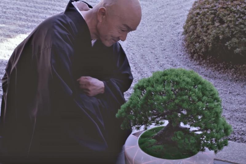 外表平凡的盆栽竟能在寺院移動自如,甚至和僧侶談大道理?(圖/截自Youtube)