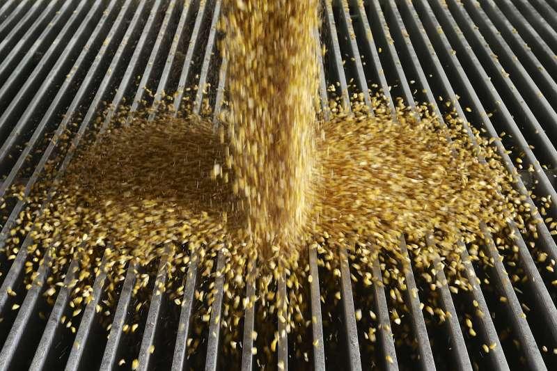 美國黃豆被中國加徵25%關稅,中國轉向全球最大黃豆出口國巴西進貨,但因巴西也沒法單獨滿足龐大需求,迫使中國仍需向美國買黃豆。(資料照,AP)
