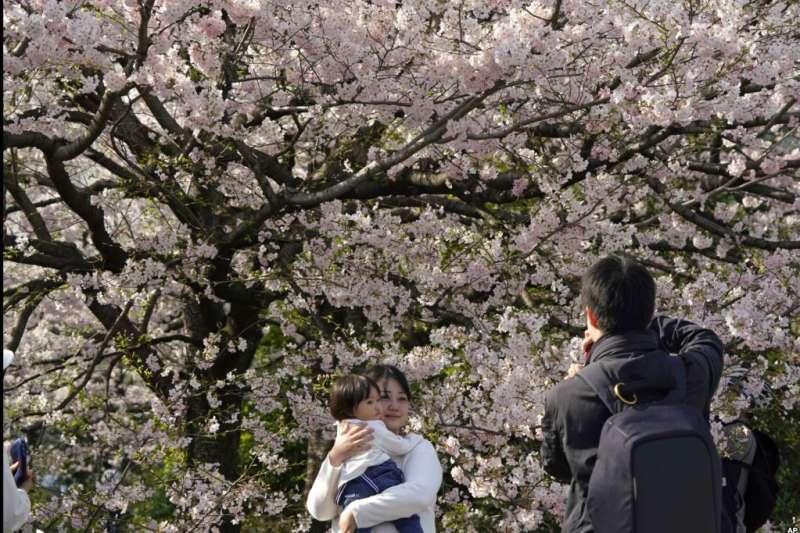 東京千鳥淵,花朵繁茂的櫻樹下,民眾開心拍照。(美國之音)