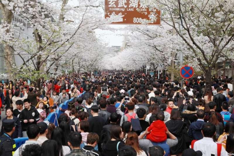 中國江蘇省南京市,玄武湖景區,雞鳴寺櫻花盛開,賞花人紛至沓來。(美國之音)